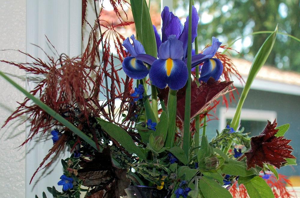 Spring bouquet from my garden