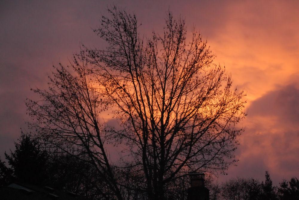 Today's Sunset, Hillsboro OR