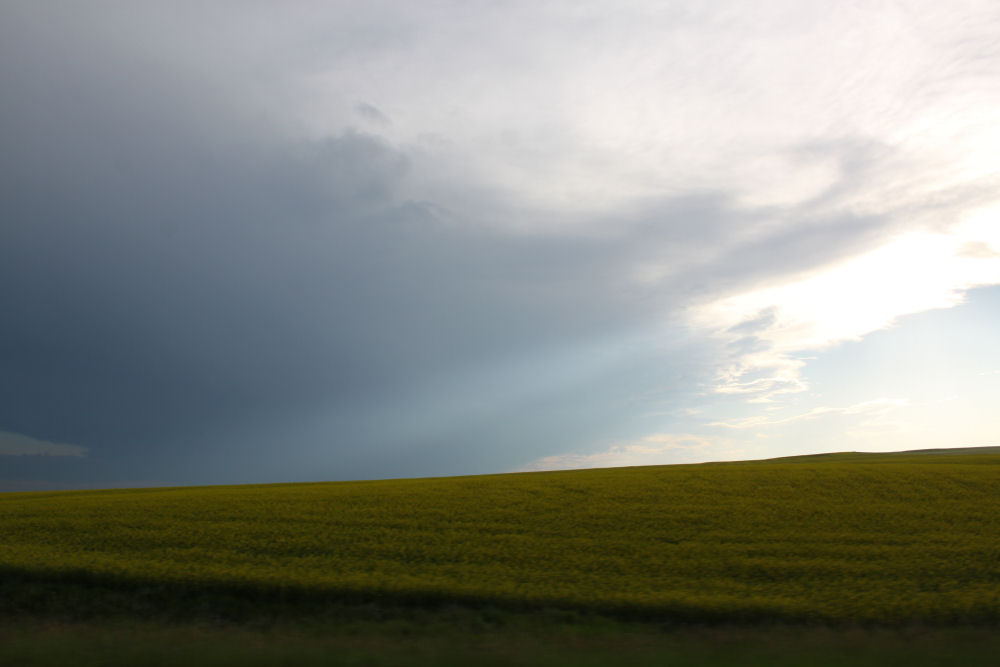 Alberta prairie - Canola fields, sunset and storm