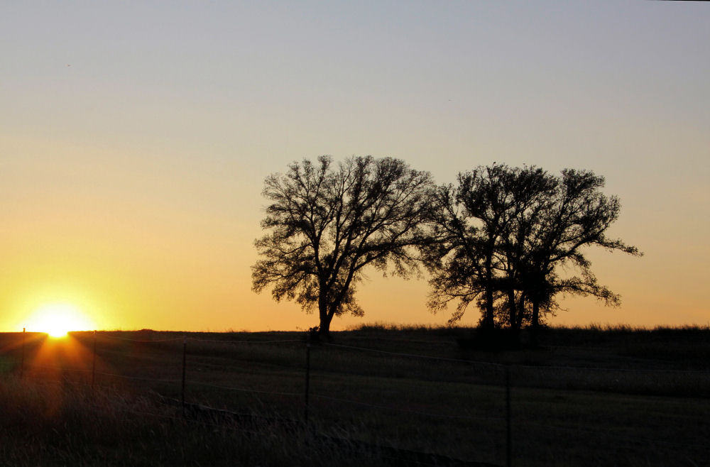 Neighborhood Oak, Lewisville, TX