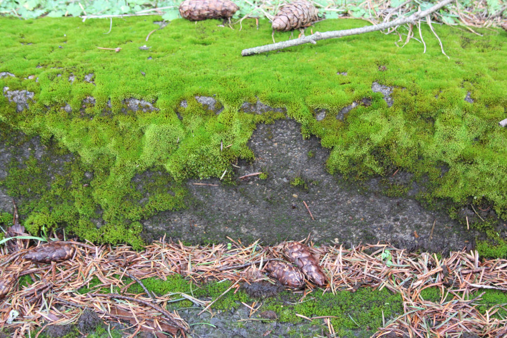 Moss thriving at Bald Peak, OR