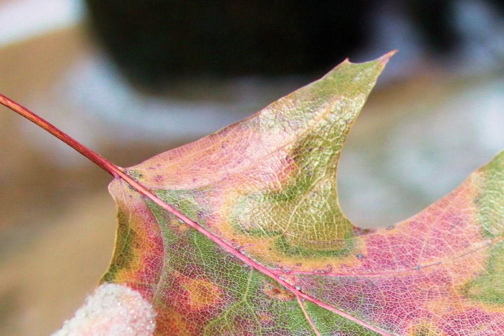 Oak Leaf, Texas-New Mexico border rest stop