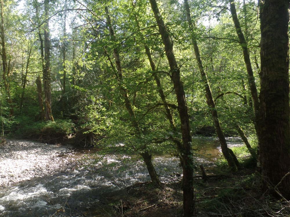 Gales Creek, Oregon