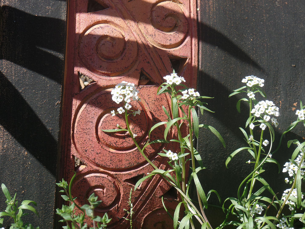 Clay pot and white Allyssum