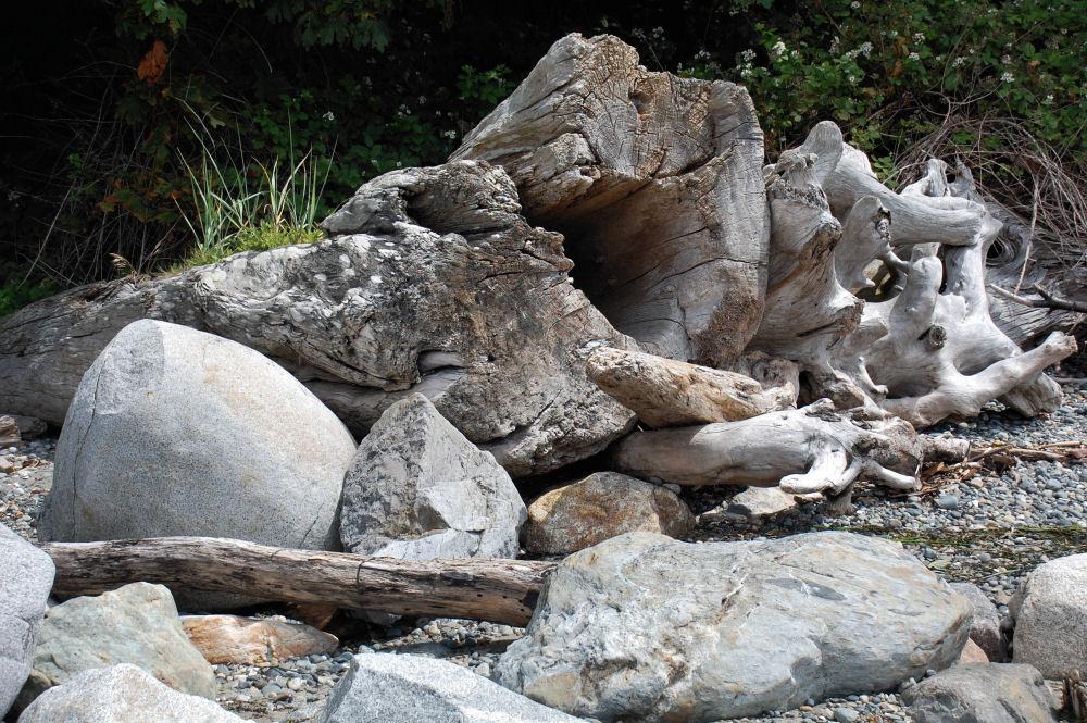 Driftwood, Fred Gingell Park, Tsawwassen, BC
