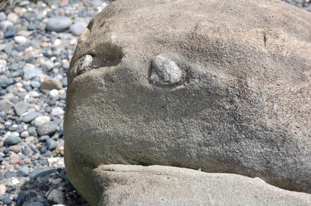 Rock face, Fred Gingell Park, Tsawwassen, BC Canada