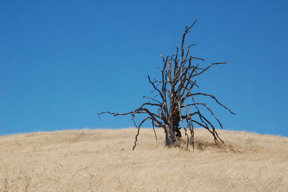 Lone tree, Mosier OR