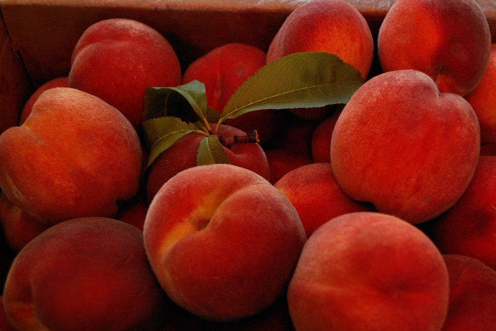 Picked fresh peaches at the Hood River 'Fruit Loop'