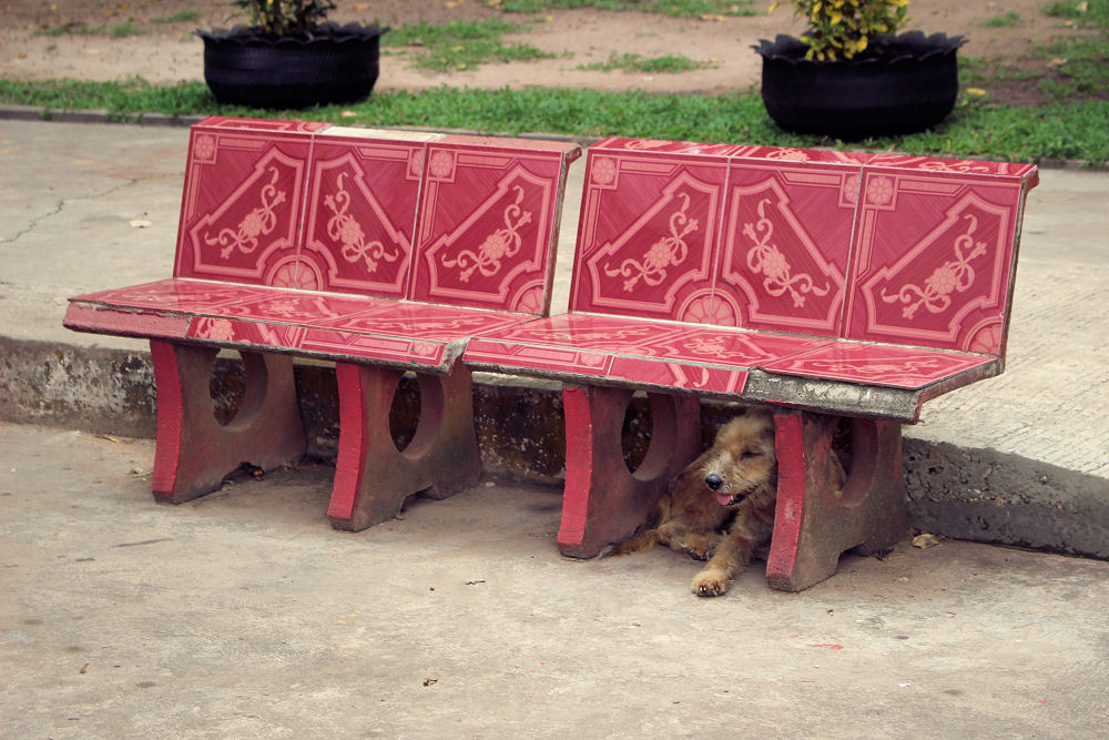 Hot dog, Wat Inpeng temple, Vientiane Laos