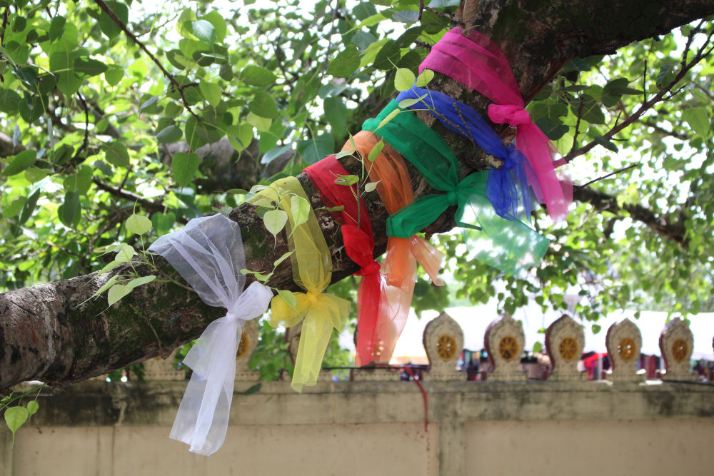 Rainbow ties on Fig tree branch, Buddha scultptures, Pha That Luang temple grounds
