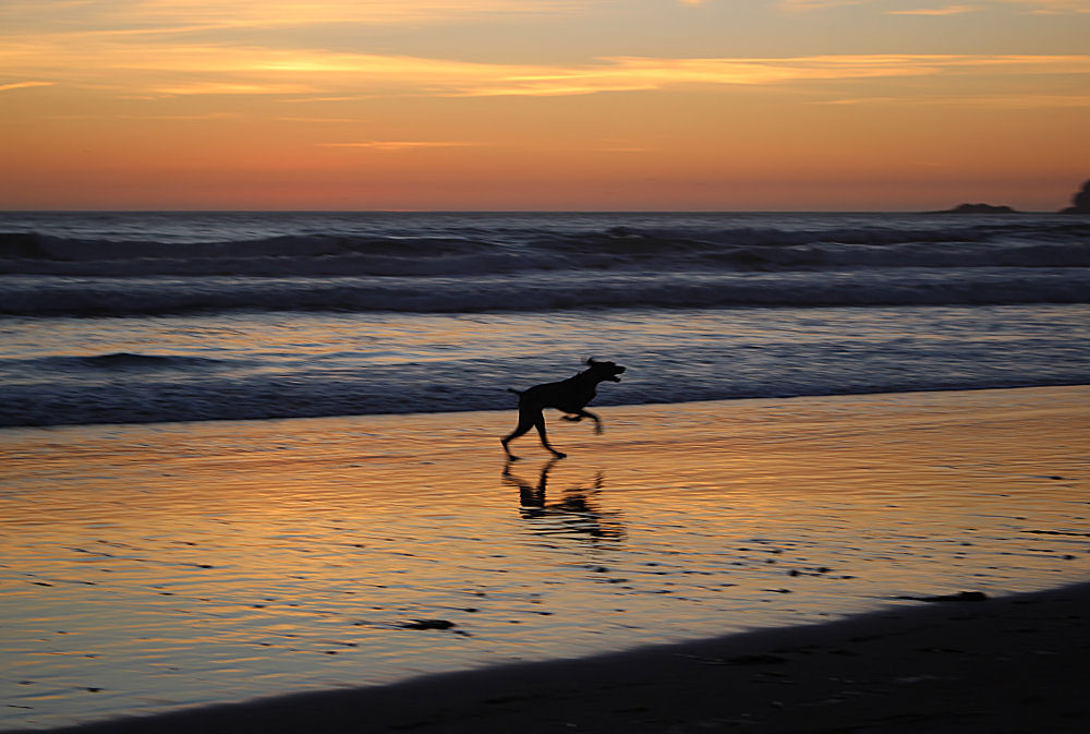 Happy dog! Sunset, Oceanside beach, Oregon