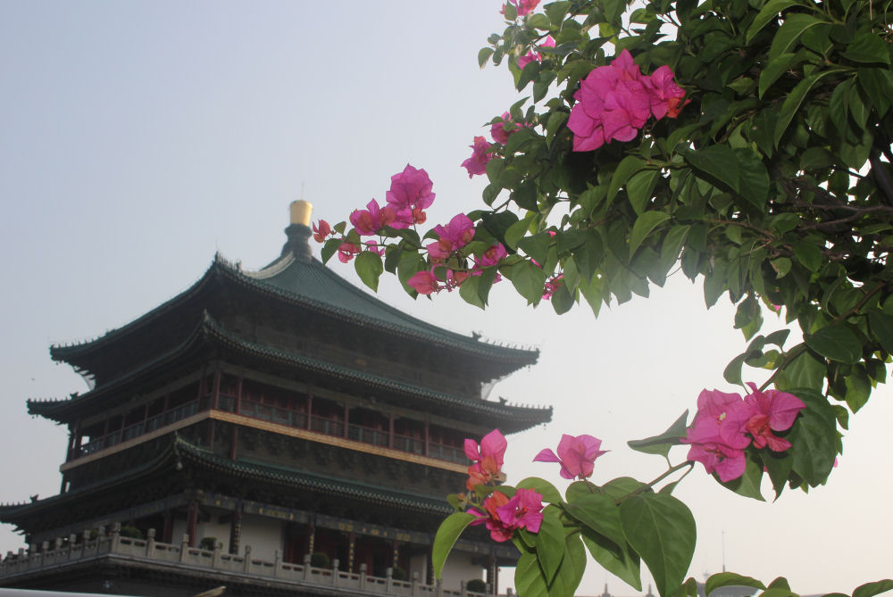 The Bell Tower, Bougainvillea in Xi'an, China
