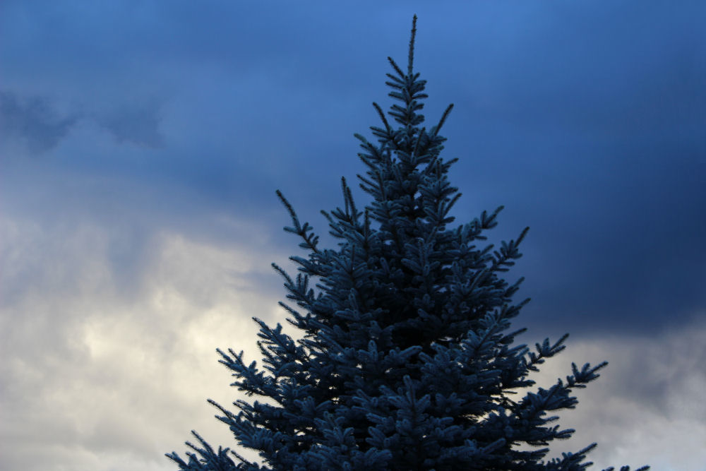 Stormy skies over Longview, Washington - Blue Spruce