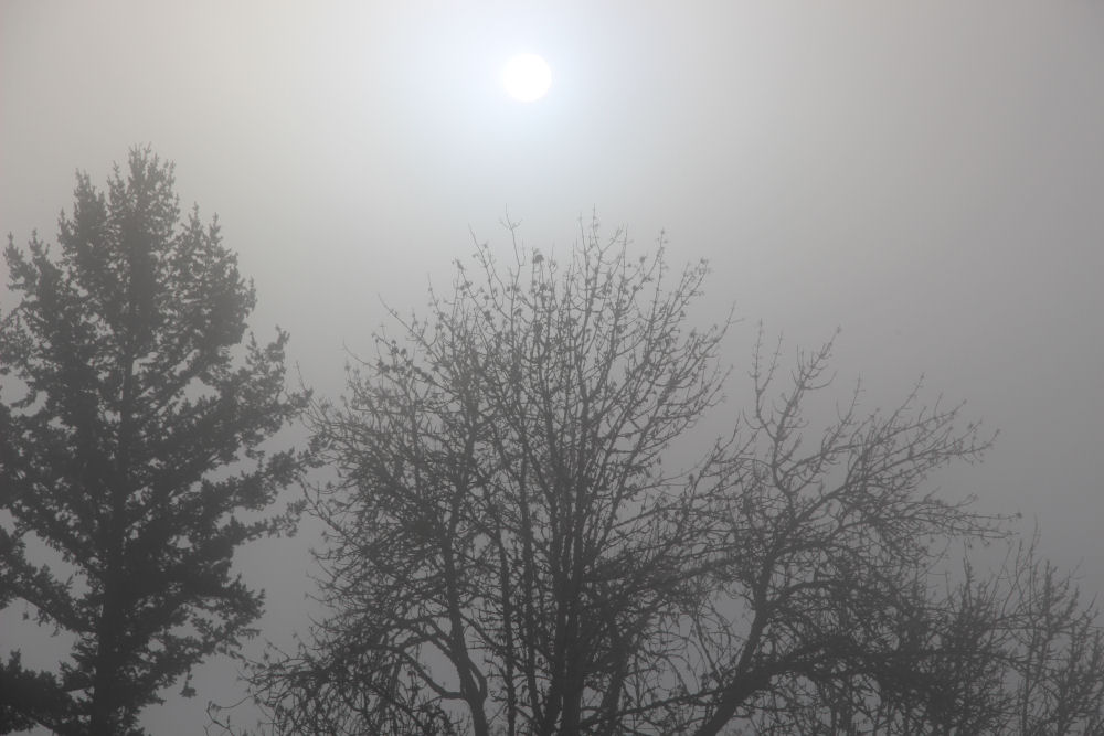Foggy morning, Hillsboro OR