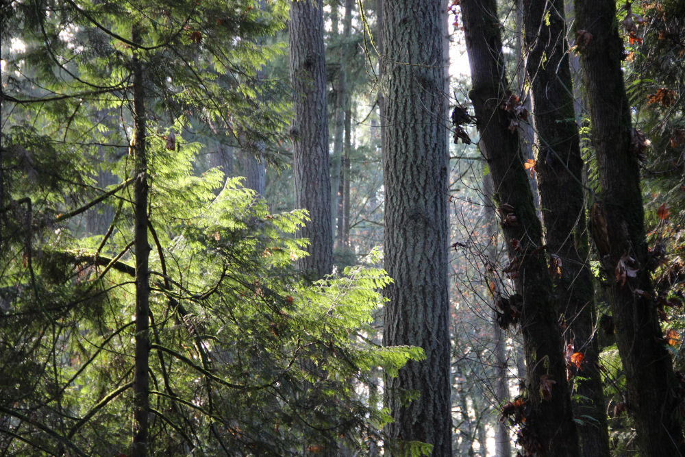 Tualatin Hills Nature Park, Beaverton, OR