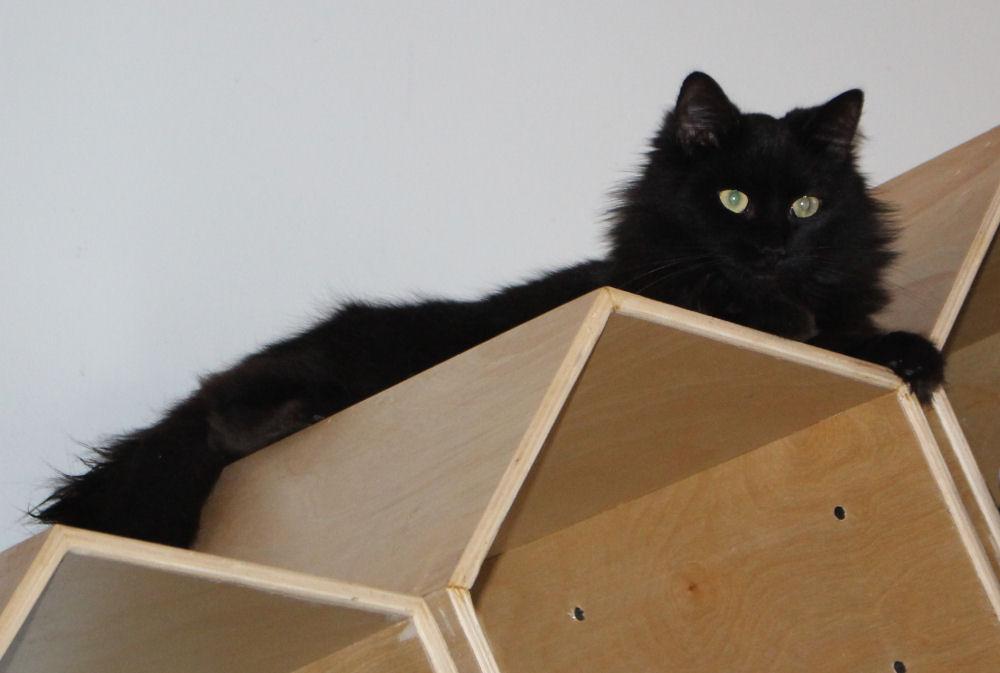 Purringtons Cat Lounge, Portland OR