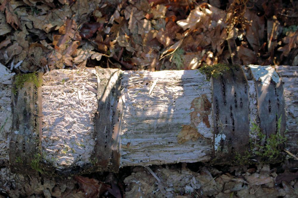 Winter interest, Tualatin Hills Nature Park, Beaverton, OR