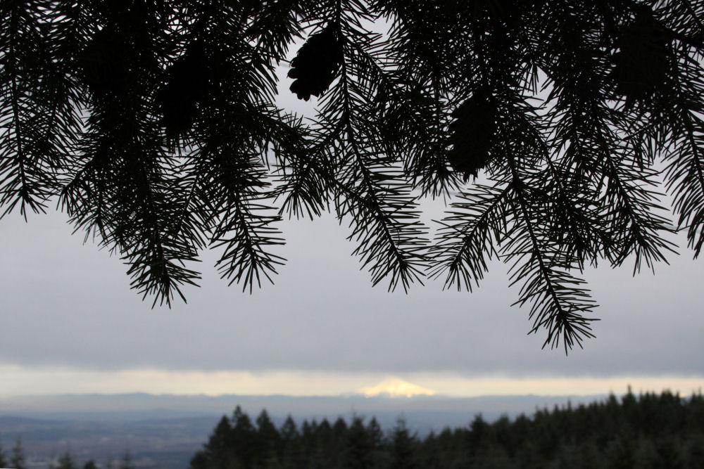 Mt. Hood from Bald Peak, OR