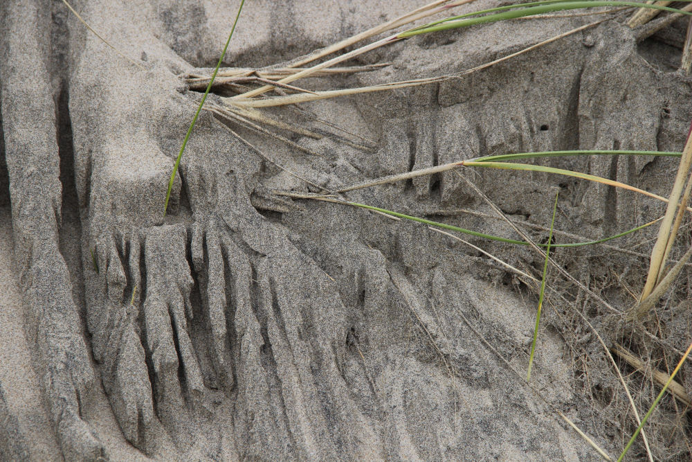 Beach grass and tide created interesting textures, Oceanside OR