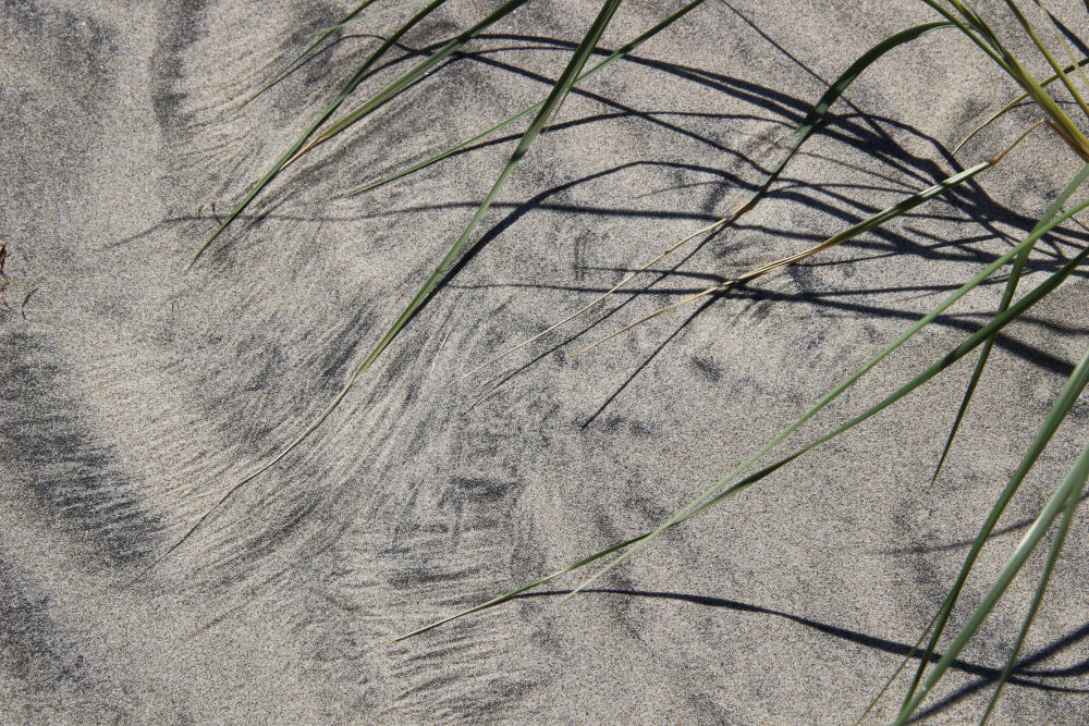 Wind-blown beach grass creates subtle designs in the sand, Oceanside OR