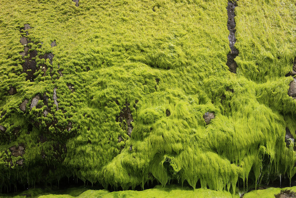 Mossy cliffs, Oceanside OR