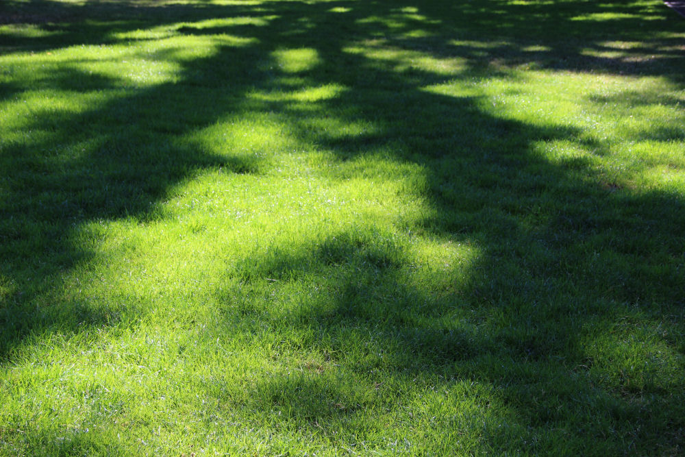 Morning shadows, Shute Park, Hillsboro OR