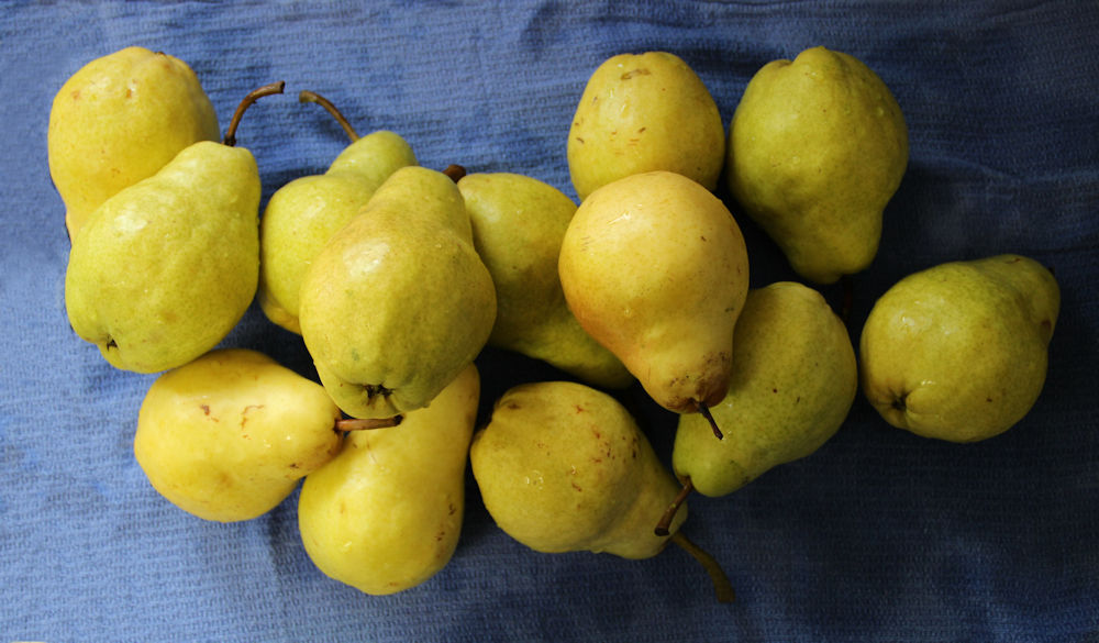 Addicted to pears - my daily fruity indulgence!