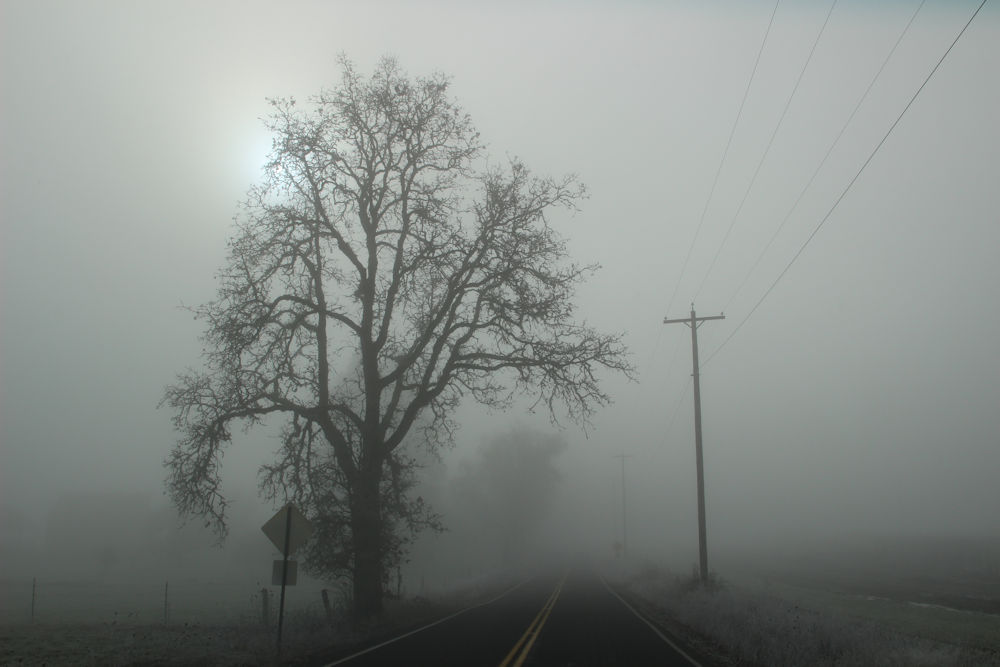Foggy morning,  Rood Bridge Road, Hillsboro OR