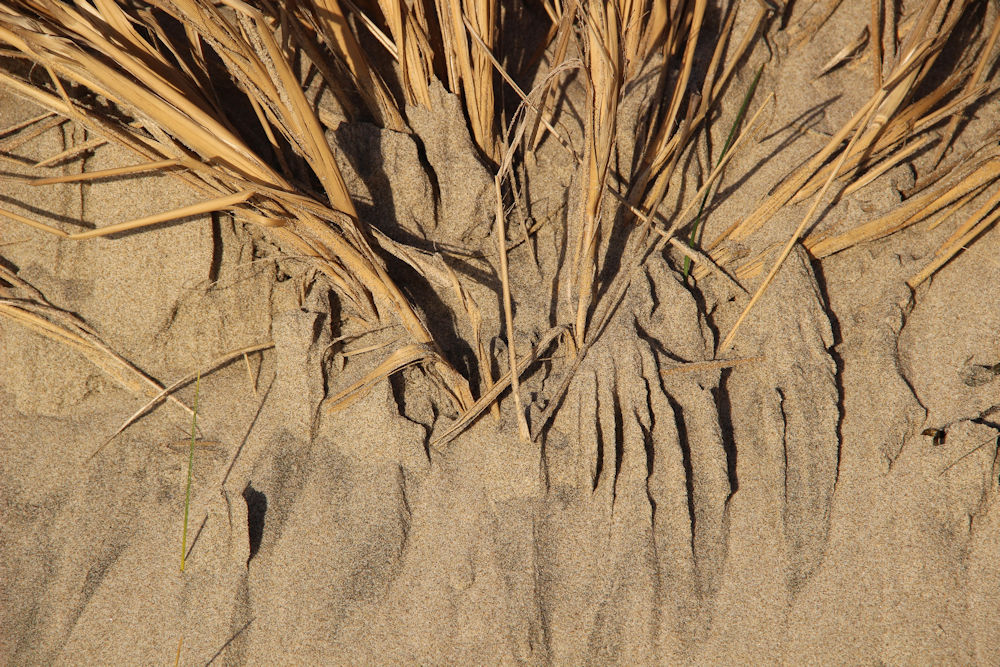 Beach grass and sand patterns, Oceanside, OR